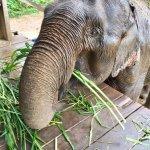 Photo de All Lao Elephant Camp