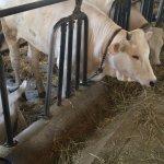 Farm Animals Up Close