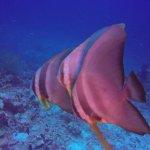 Photo de Euro Divers