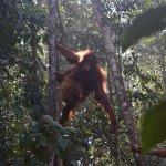 Photo de Semenggoh Nature Reserve