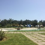 Photo of Yellow Alvor Garden