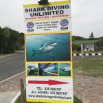 Photo of Shark Diving Unlimited