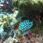 Photo of Wicked Diving Khao Lak - Day Tours