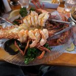 Mabel's Lobster Claw Bild