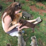 Foto de Lanai Cat Sanctuary