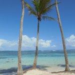 palmiers plage de ste anne