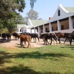 Horses are our passion at Thandile Country Lodge