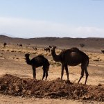 Photo of Camel Excursions Morocco