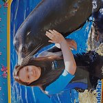 My daughter jades 17th birthday surprise. Having loved sealions since a toddler .
