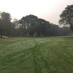 Golf greens at Tolly