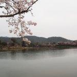 桜が咲いて・・・