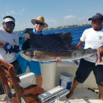 Beautiful Sailfish was the highlight of the trip.