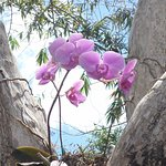 Orchids in the trees