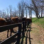 Pinegrove Family Dude Ranch Foto