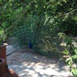 Photo of The Peacock Garden