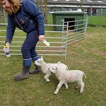 Children and adults enjoyed watching the lambs being bottle fed