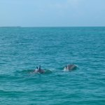 Dolphins come to play around Capt.'s boat!!