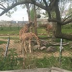 Foto de Indianapolis Zoo