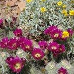 Desert Vegetation in Early April