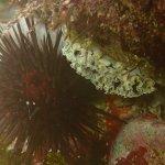 Red Urchin and Lettuce Leaf Slug