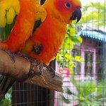 Friendly birds nearby
