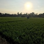 Morning view of the paddy fields from Villa Arya