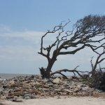 Beautiful Driftwood Beach...