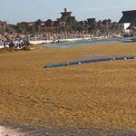 Terrible beach. Seaweed not cleaned until 3-5 pm, tiny, filled with people, shallow - up to smal