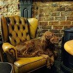 Dog friendly bar, music and food
