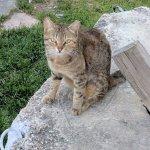 Beautiful cat in the park