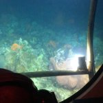2 lion fish, looking out of the captain's windshield