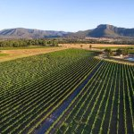 22 acres of vinyard, with a stunning view of Yellow Rock