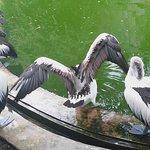 Photo of Ragunan Zoo