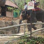 Chiang Mai Zoo Foto