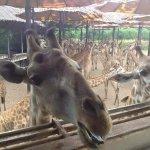 Photo of Safari World