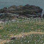 Photo of Kabushima Island