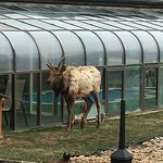 Greeted by Elk