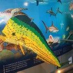 Nice unique aquarium