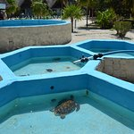Foto de Sea Turtle Hatchery