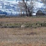 Photo de Jackson Hole Wildlife Safaris - Day Tours