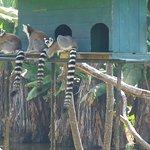 Tsimbazaza Zoo Foto