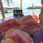 Shell at blue lagoon island