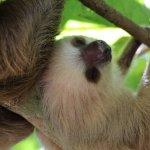 2 toe sloths.