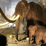 museum that invest in ensuring exhibits are genuine