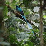 Our first glimpse of a Resplendent Quetzal in Panama was on this trail.