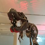 Dinosaurs at the museum!