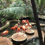 Foto di Dallas World Aquarium