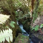 Photo de Buried Village of Te Wairoa