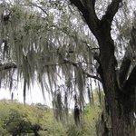 Photo de Audubon Park