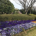Photo of Tokyo Metropolitan Jindai Botanical Park